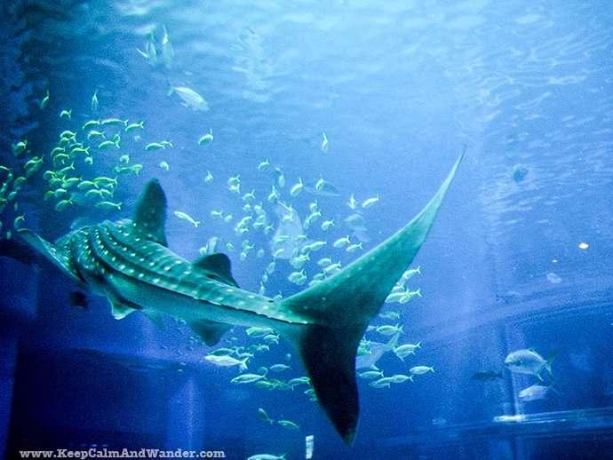 World's Largest Aquarium Tank in Osaka (2009).