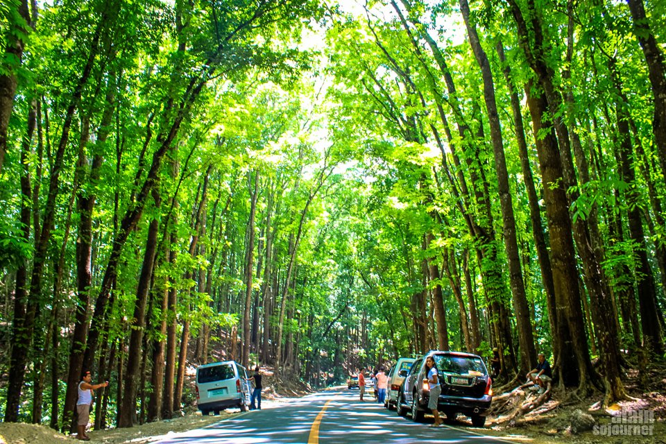 Things to do in Bohol Man-Made Forest Bohol Philippines