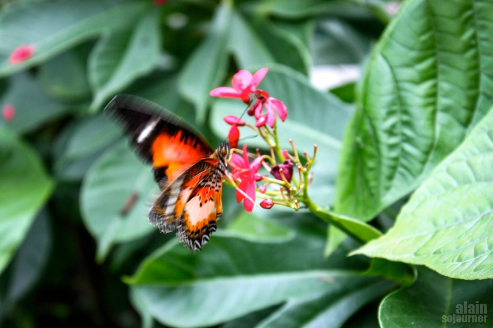 Butterfly Garden in Davao City, Philippines.
