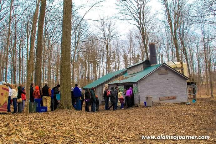 Maple Syrup Sugar Bush Tour in Elmira.