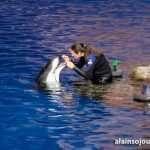 Shedd Aquarium Chicago Things To Do 12