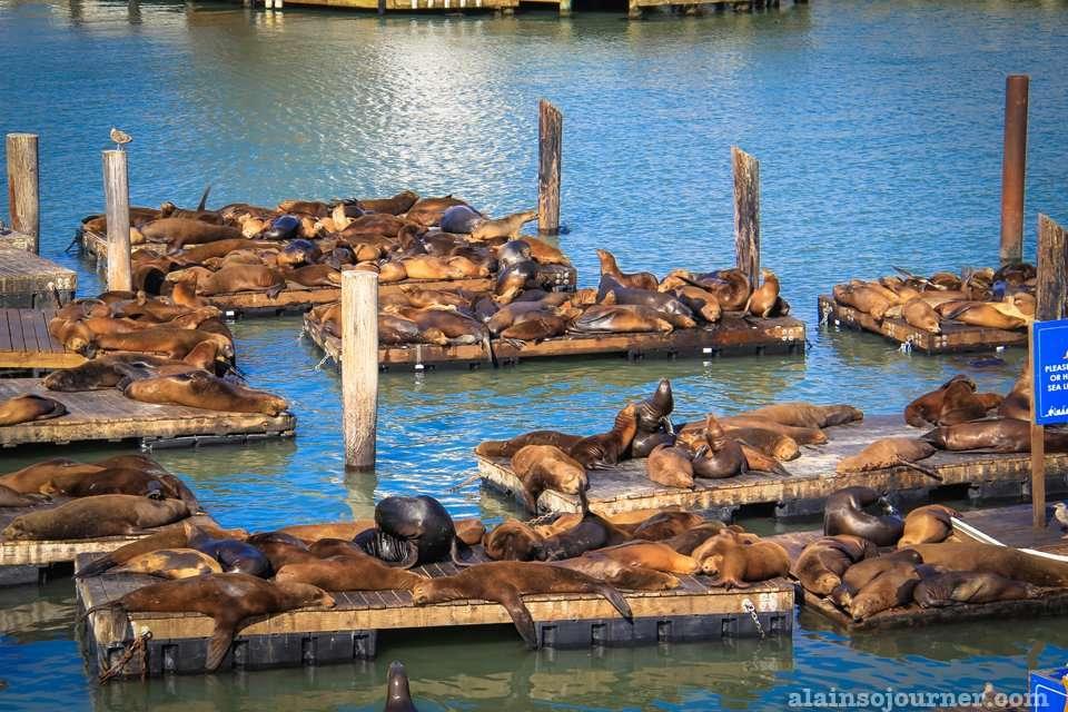 Sea lions at Fisherman's Wharf