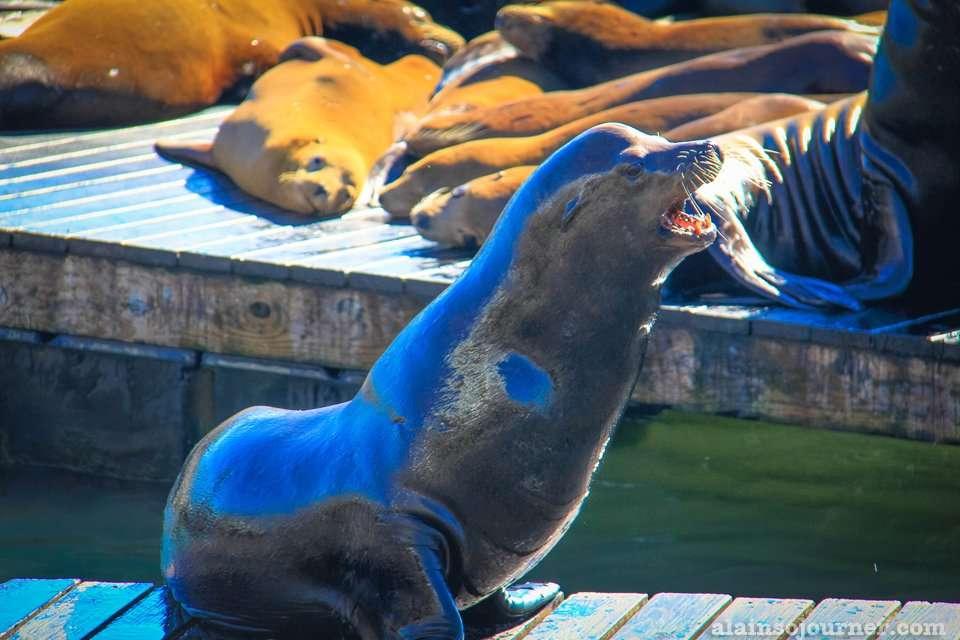 Sea lions at San Francisco Fisherman's Wharf