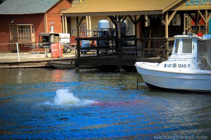 Jaws Tour at Universal Studios Amity Island