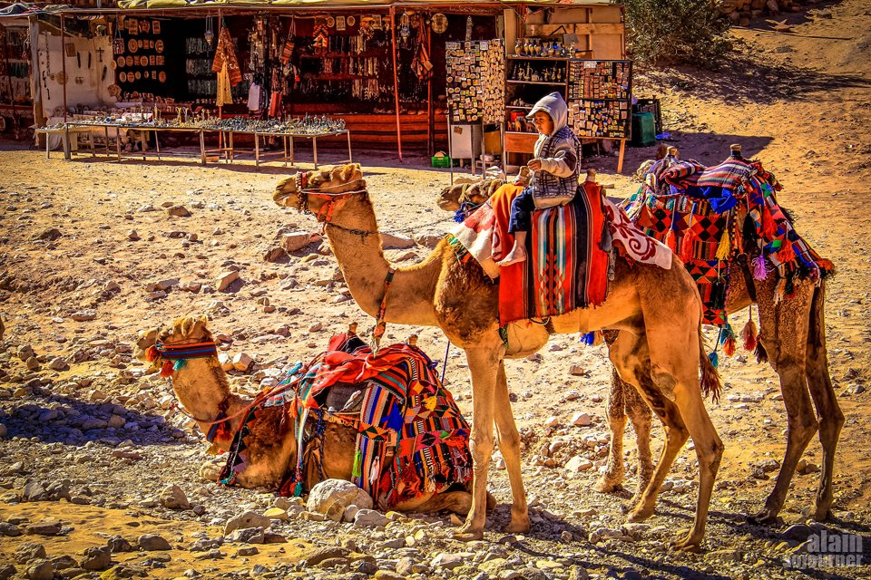 Things to do in Jordan: Ride a camel.