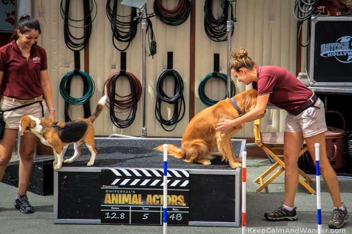 Animal Actors at Hollywood Universal Studios in Los Angeles.