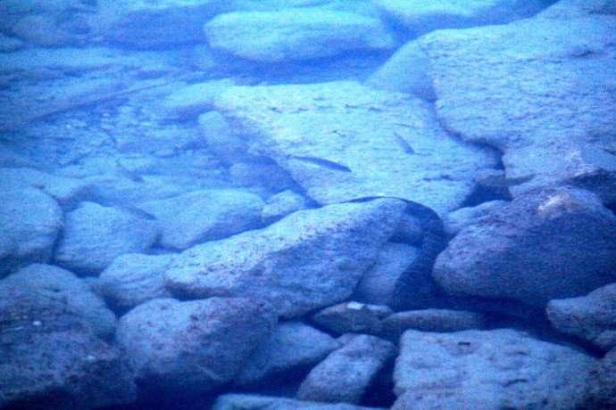 snake cyprus lake