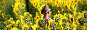 It's summer! Get out and is it a Sunflower Farm in Hamilton, Ontario.