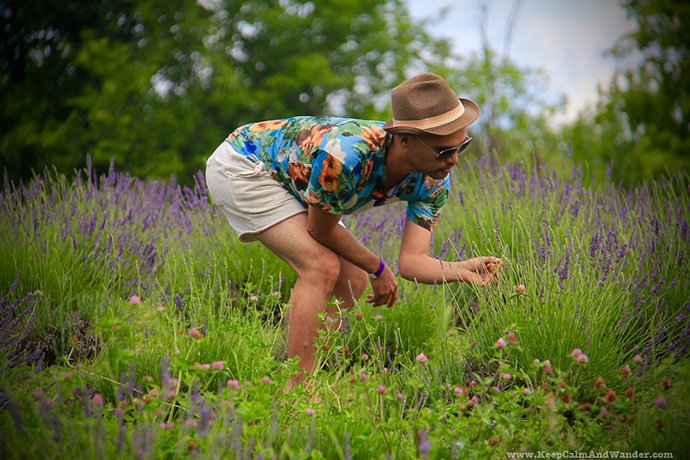 10 Day Trips from Toronto: Visit a Lavender Farm