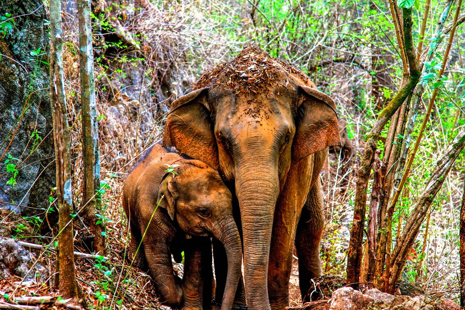 Hiking with the Elephants in Chiang Mai