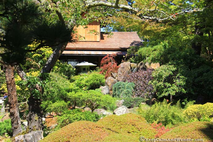The Japanese Garden from De Young Museum.