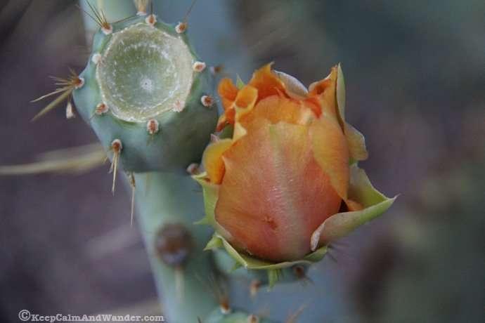 So Many Cactuses at the Desert Botanical Garden in in Phoenix, Arizona.