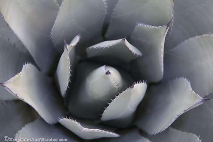So Many Cactuses at the Botanical Garden in Phoenix, Arizona.