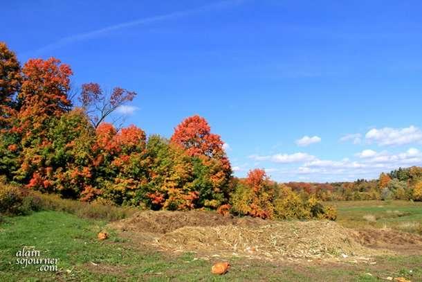 Chudleighs Apple Picking Farm in Milton, Ontario.