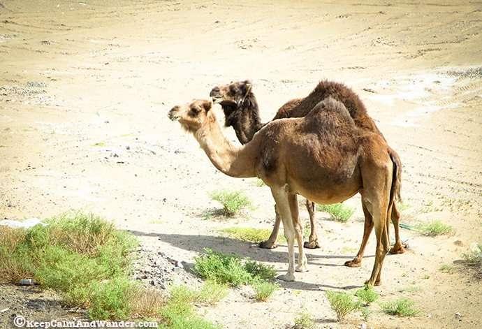 Things to do in Umlujj, Saudi Arabia.