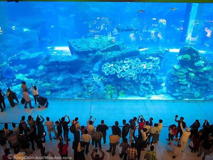 Mall of Dubai Aquarium and Underground Zoo.