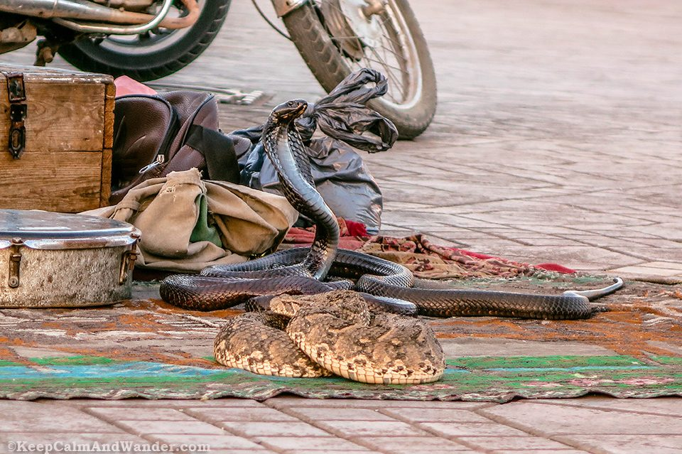 The Snake Charmers at Place de Jemaa El-Efna (Marrakesh, Morocco).