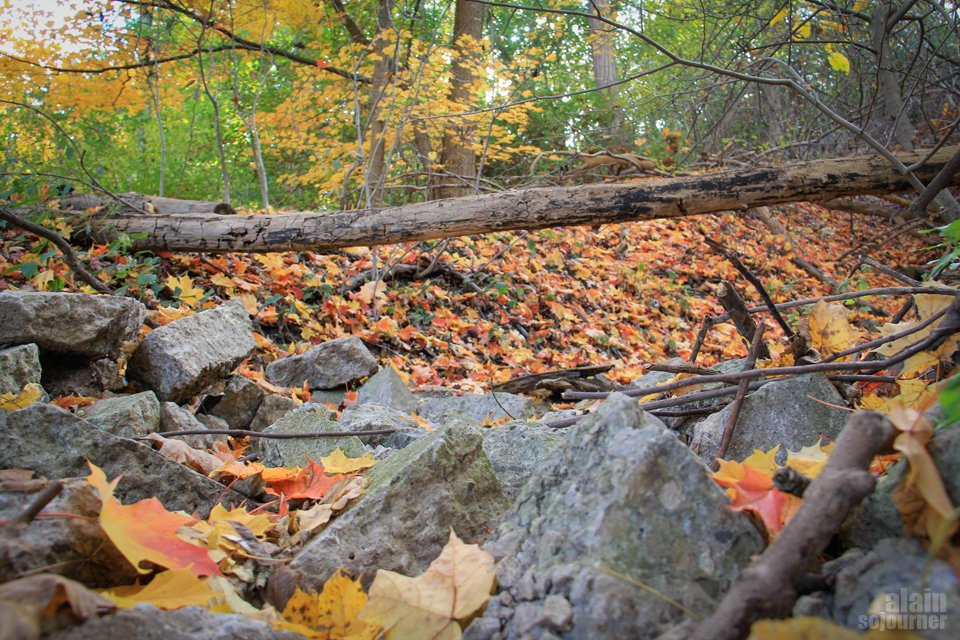 Crothers Woods Fall Colours