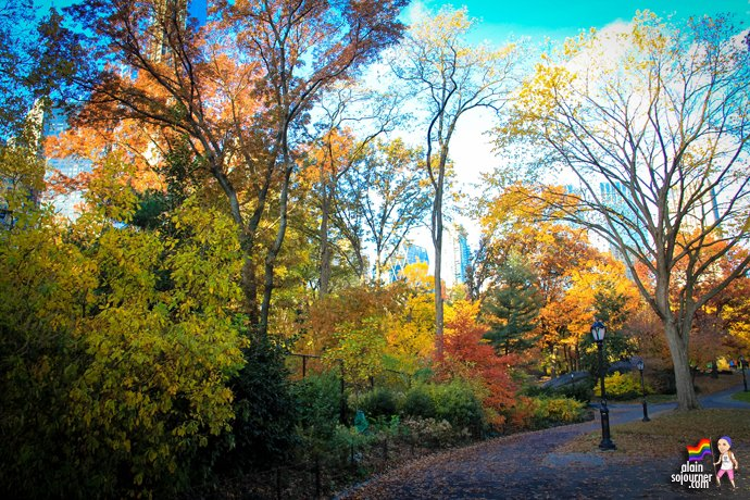 Fall Colours in Central Park, New York.