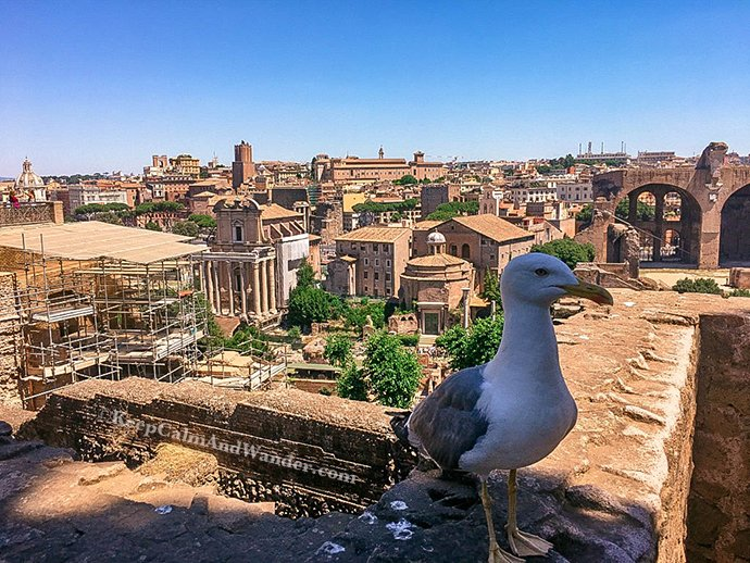 A Leisurely Walk at the Roman Forum and Palatine Hill (Rome, Italy).