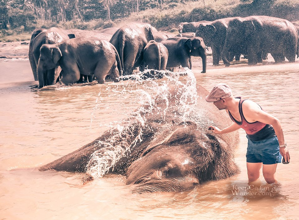 I Bathed an Ellie at Pinnawala Elephant Orphanage and I Instantly Regretted it! (Sri Lanka).