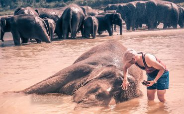Bathing Elephants at Pinniwala Elephant Orphanage 8
