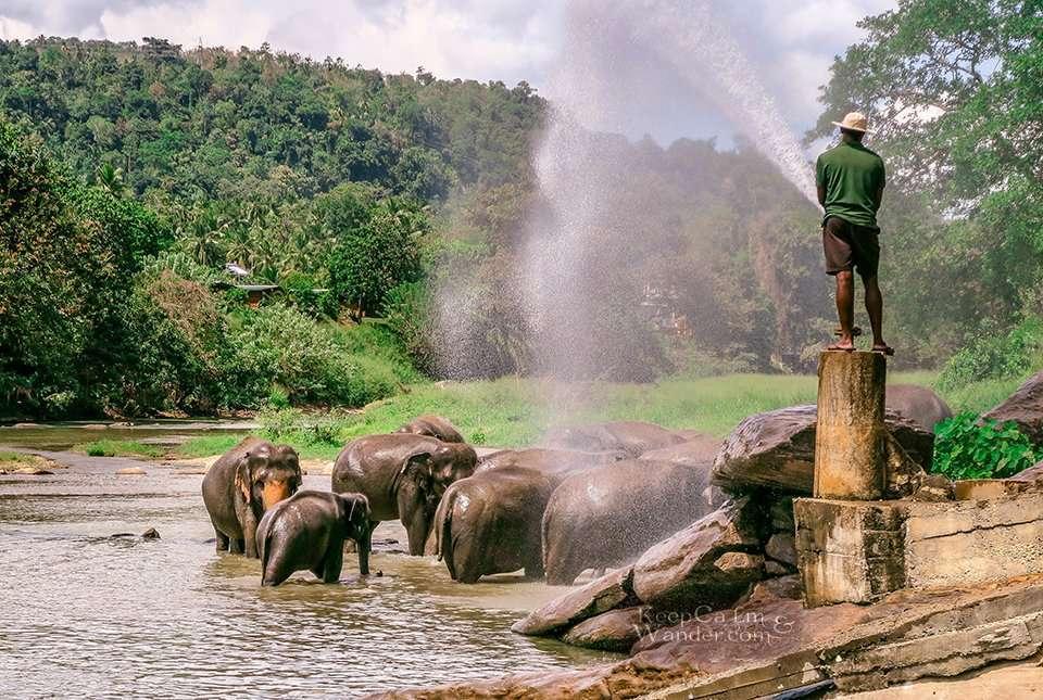 The State of the Elephants at Pinnawala Elephant Orphanage (Sri Lanka).