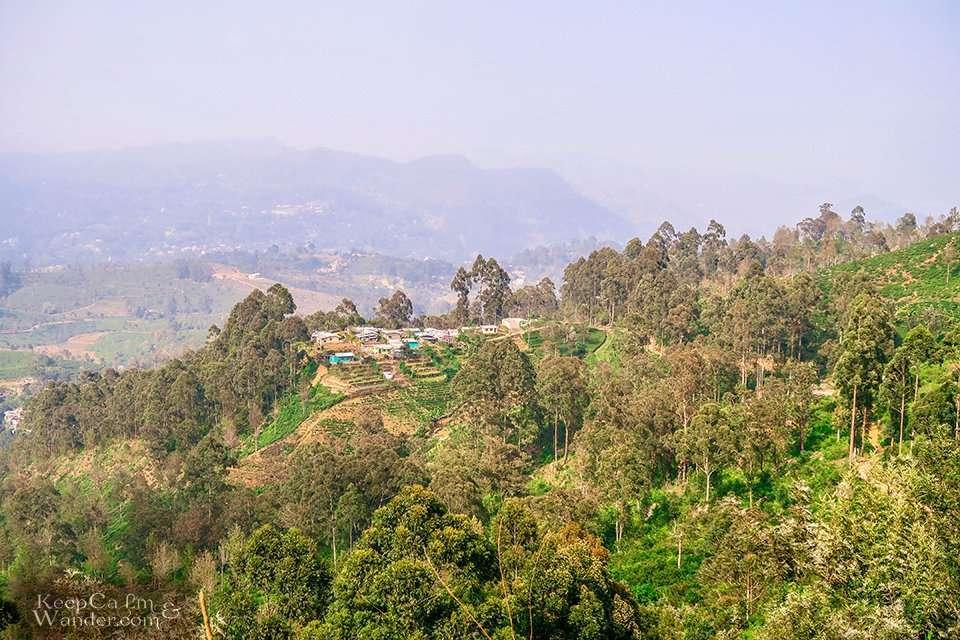 Tea Plantation in Haputale, Sri Lanka