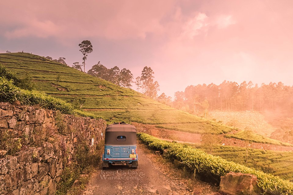 The Views Are Magnificent on Our Way up to Lipton's Seat (Haputale, Sri Lanka).