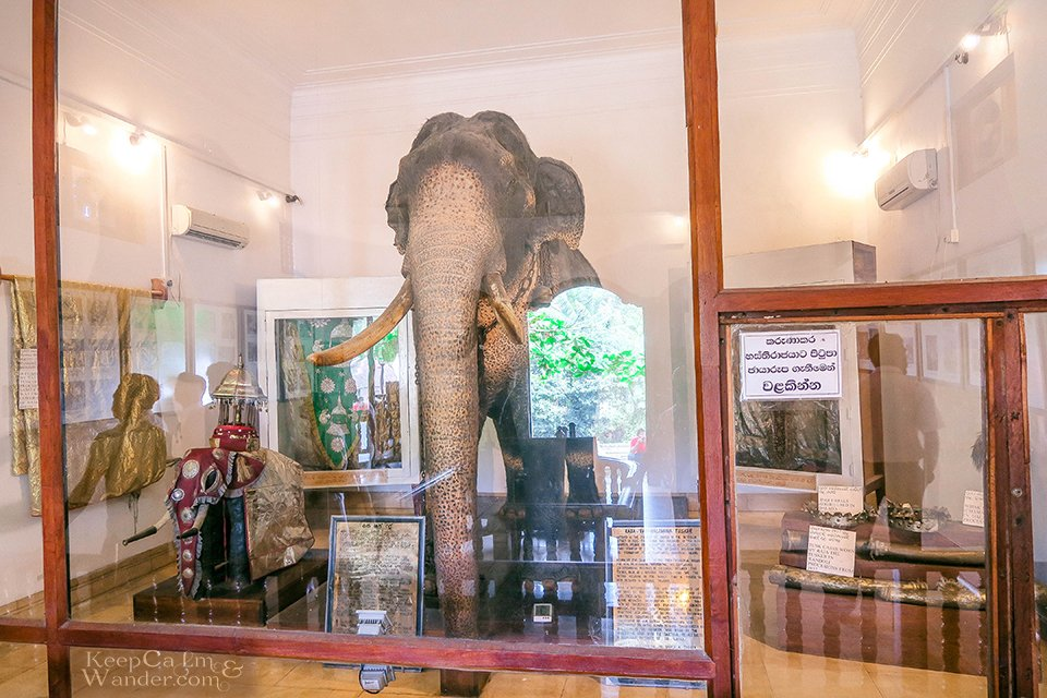 Rajah the Tusker Museum - Temple of the Sacred Tooth Relic (Kandy, Sri Lanka).