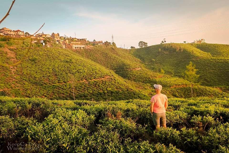 The Stunning Pedro Tea Estate in Nuwara Eliya (Sri Lanka).