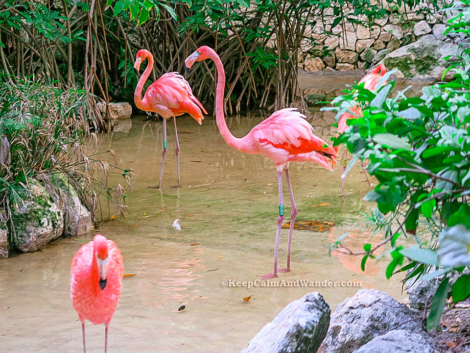 Things to do and see at eXcaret in Riviera Maya (Cancun, Mexico).