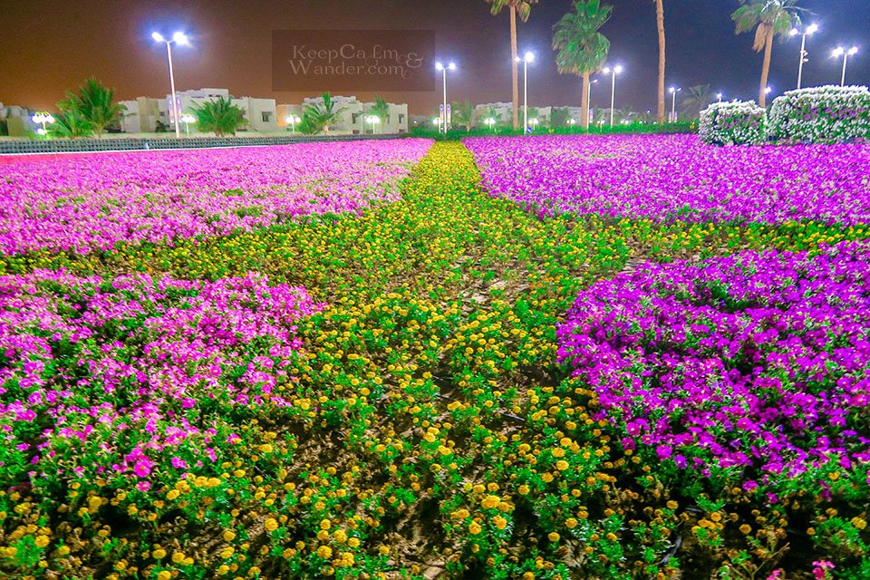 Photos From Yanbo Flower Festival 2018 - The World's Largest Carpet of Flowers (Saudi Arabia).
