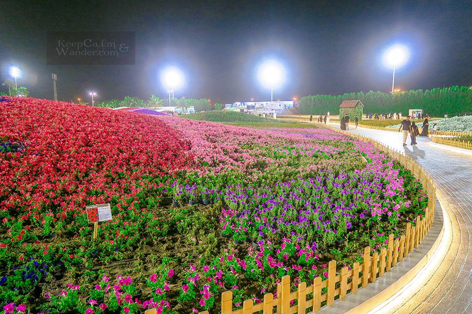 Photos From Yanbu Flower Festival 2018 - The World's Largest Carpet of Flowers (Saudi Arabia).
