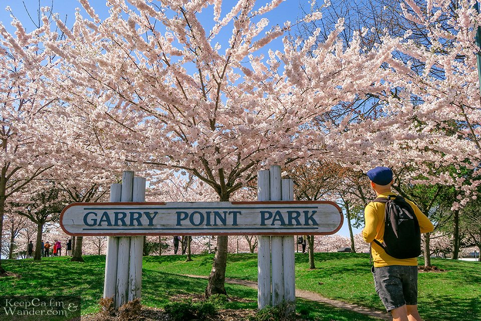 Cherry Blossoms at Garry Point Park (Richmond, Vancouver).