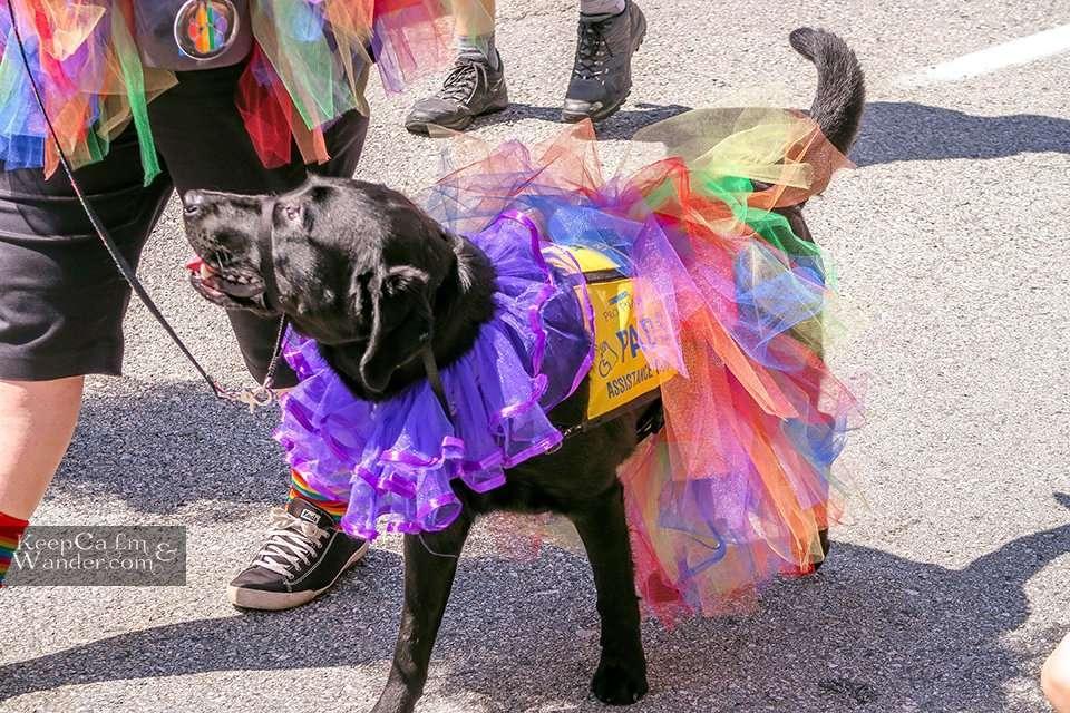 Vancouver Pride Parade 2019Vancouver Pride Parade 2019